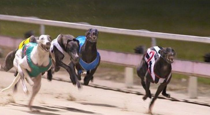 Nsw bans greyhound racing following inquiry four corners expos Better homes and gardens tonight s episode