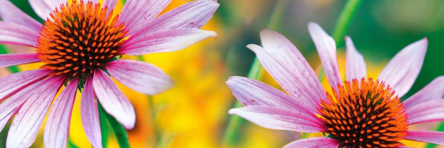 garden answers branding - Garden Answers